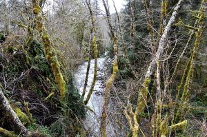 Slick Rock Creek 3